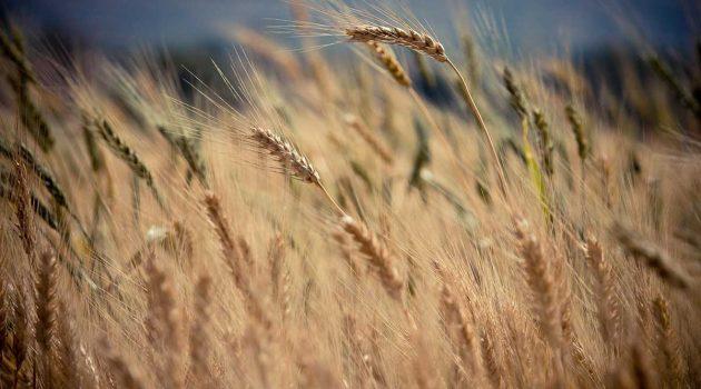 Google e i cerchi nel grano – il nuovo logo di google